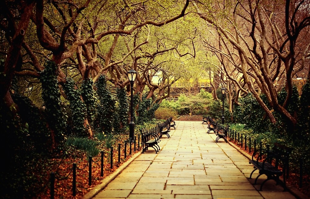 Urban Forest Primeval - Spring - Central Park by Vivienne Gucwa