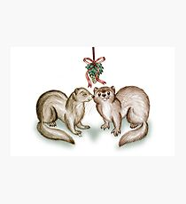 A Ferrety Kiss - Christmas Cards Photographic Print