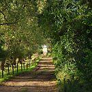 Paths by vbk70