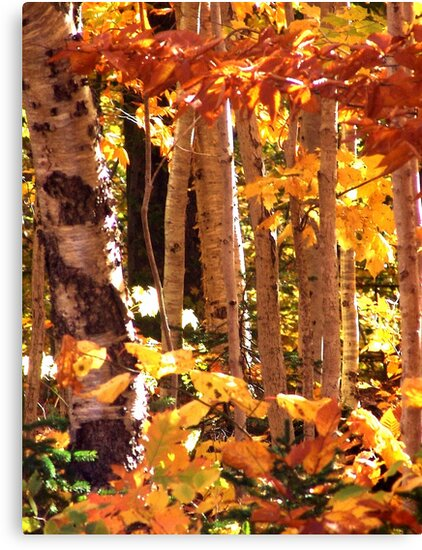 Autumn Leaves by George Cousins