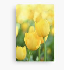 .yellow. Canvas Print