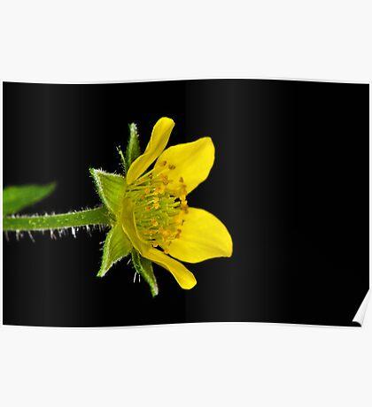 Flower 8 Poster