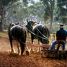 Ploughing the Field at Churchill Island by Christine Smith