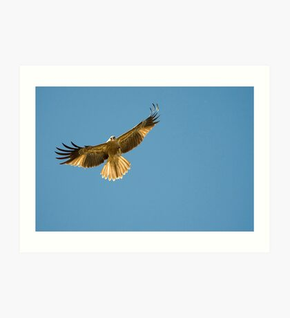 Feeding the Kites - Adelaide river NT Art Print