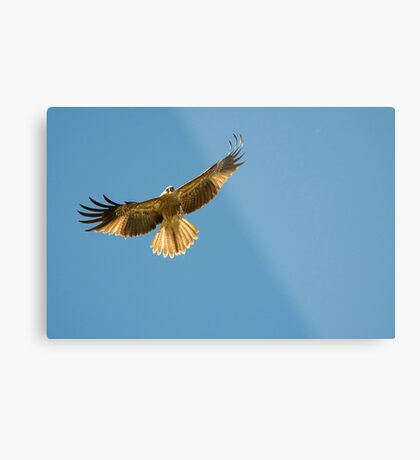 Feeding the Kites - Adelaide river NT Metal Print