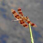 Flying Solo by Pietrina Elena Photography