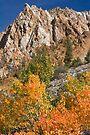 Bishop CA North Fork Fall by photosbyflood