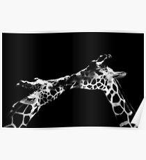 Giraffe Kiss Poster