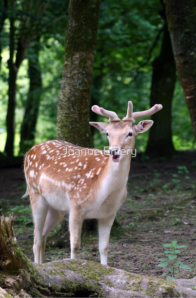 Deer in the woods by Joanne Emery