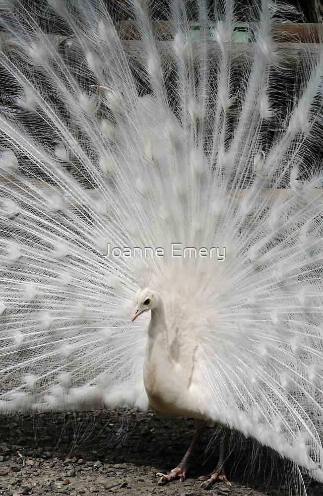 White peacock by Joanne Emery
