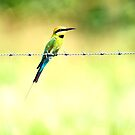 Bird on a wire - bee eater by Jenny Dean