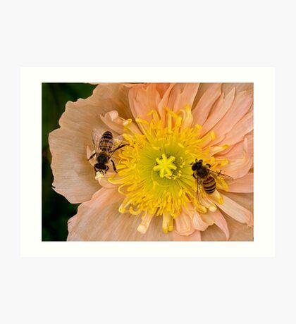 Glückliche Bienen Kunstdruck