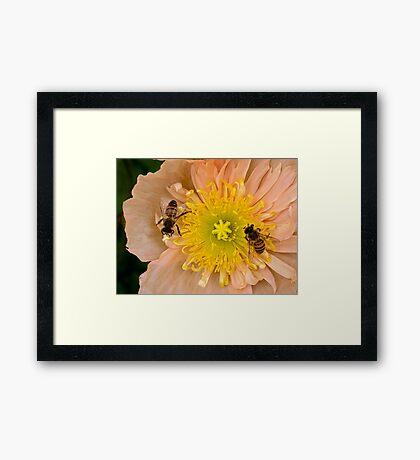 Glückliche Bienen Gerahmtes Wandbild