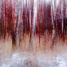 Birch forest by natans
