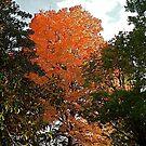 Autumn Orange by Gordon Taylor