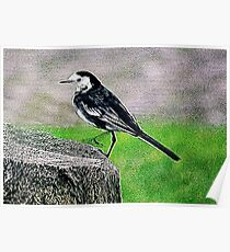 Fractalius Pied Wagtail Poster