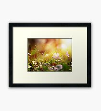 Nature scene close up Framed Print