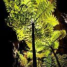 Tree Fern by Kana Photography