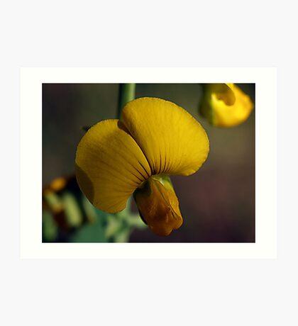 Florida Wild Flower -- Rattle-Box Art Print