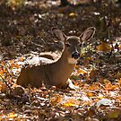 The doe by krysleighphoto