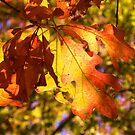 Leaves Me Breathless!!! by NatureGreeting Cards ©ccwri