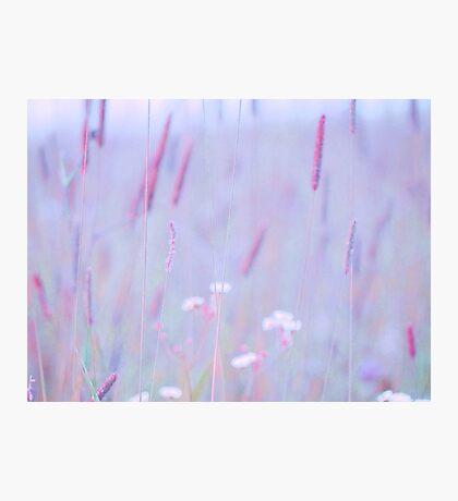 summer grass 33 Photographic Print