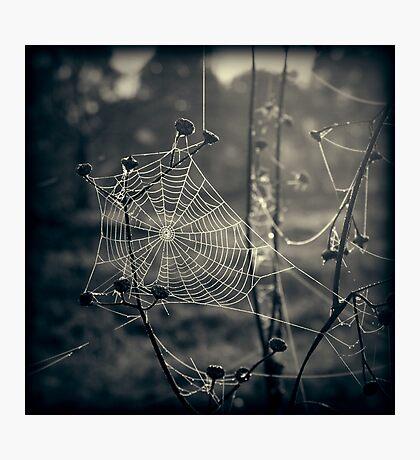 Beneath the Apple Trees Photographic Print