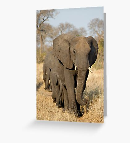 Walk This Way.... Greeting Card