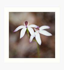 Caladenia gracilis - Musky caladenia Art Print