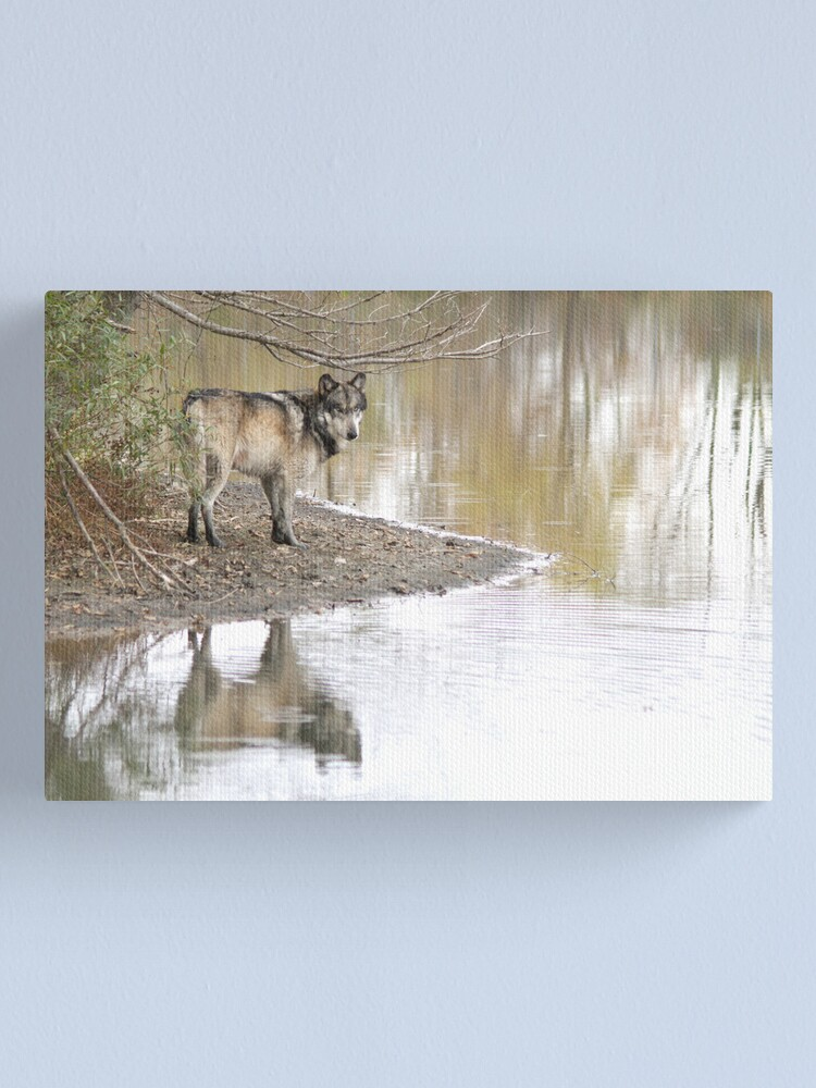 Alternate view of Reflections of a wolf Canvas Print