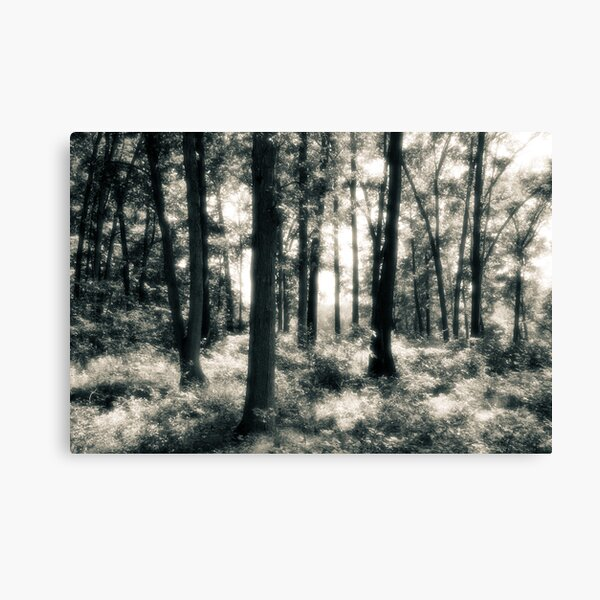 A Place Where Time Does Not Matter Canvas Print