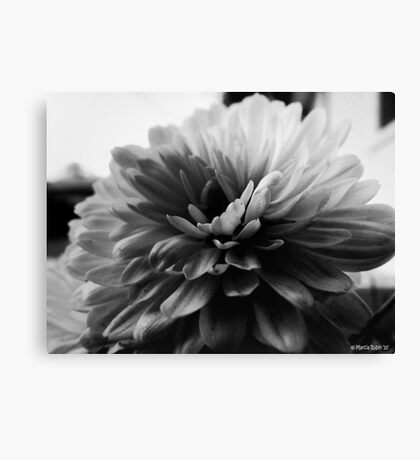 White Dahlia Canvas Print