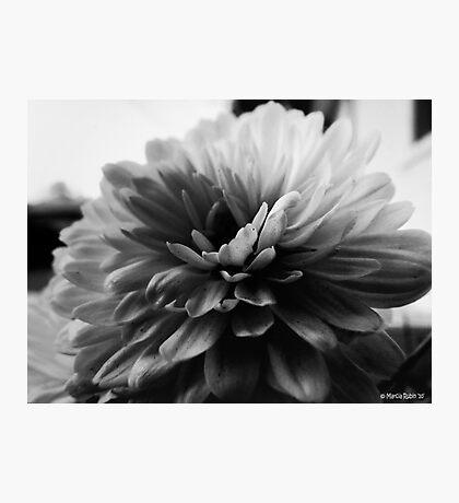 White Dahlia Photographic Print