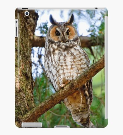 LEO - Long Eared Owl - Ottawa, Ontario iPad Case/Skin