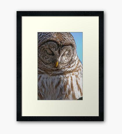 Barred Owl in Tree - Brighton, Ontario Framed Print
