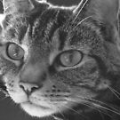 Tabby Cat Black and White Portrait Photography by WiseKitty