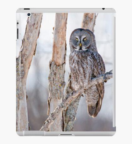 Great Grey Owl - Dunrobin Ontario iPad Case/Skin