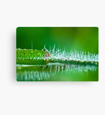 Water Spike  Canvas Print