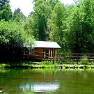 Summer at Lone Duck  by Robert Meyers-Lussier