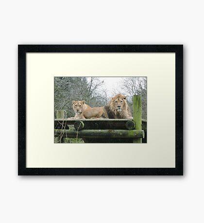 Mr & Mrs (Lion) Framed Print