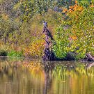 The Fishing Hole by ECH52
