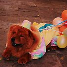 How many more balloons will it take for this Chowchow to fly to the moon? by Alicia R. Bernal