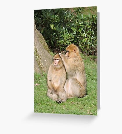 So, What Are We Having Done Today?  Greeting Card
