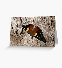 Australian Admiral Butterfly Greeting Card
