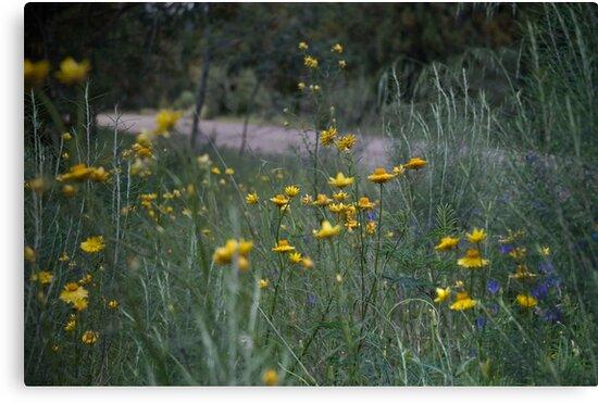 Roadside Wildflowers by garts