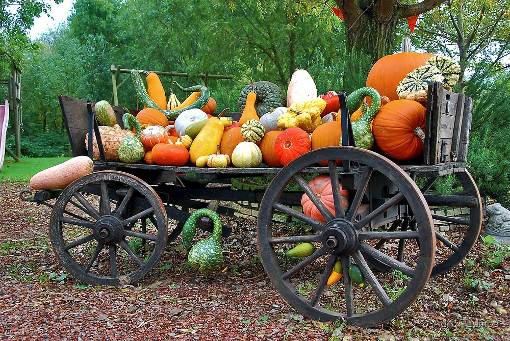 A farmers cart with autumn colors by Adri  Padmos