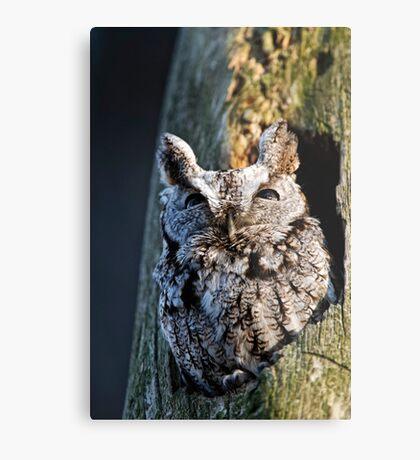 Screech Owl - Ottawa, Ontario Metal Print