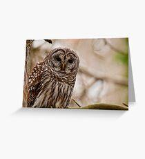 Barred Owl - Presqu'ile Provincial Park  Greeting Card