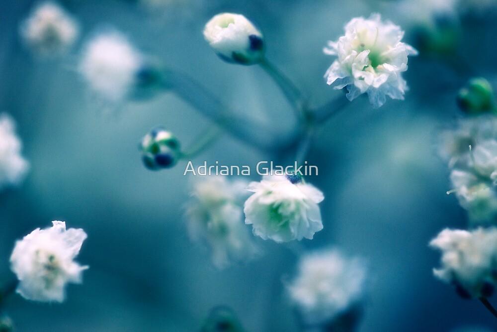 she dreams of endless tomorrows by Adriana Glackin