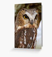 Saw Whet Owl - Amherst Island, Ontario Greeting Card